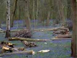 Blakes Wood